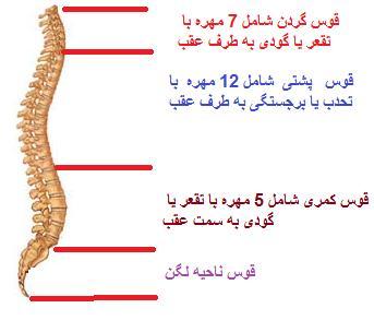 آناتومی کمر1