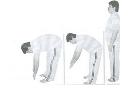 کشش عضلات پشت2